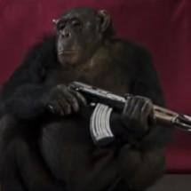 haftbefehl-affen-zoo.video